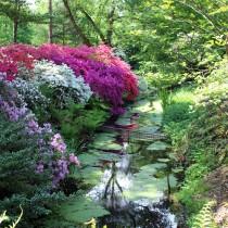 Rhododendronpark, Bremen, Rhododendren, Rhododendron