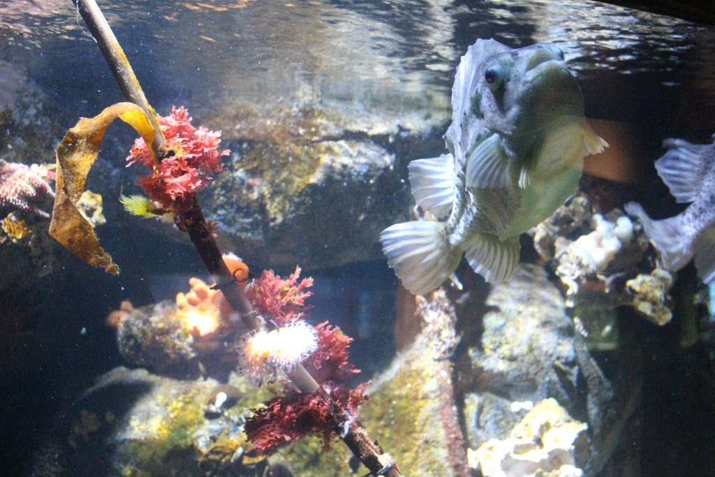 Zoo am Meer, Bremerhaven, Aquarium