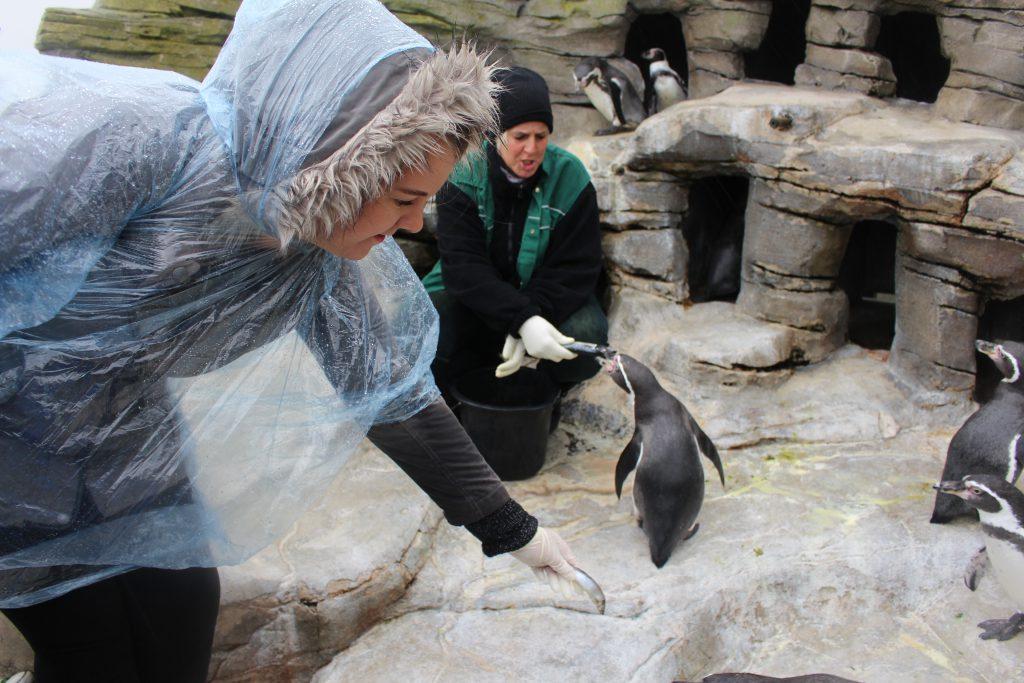 Zoo am Meer, Bremerhaven, Pinguine